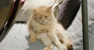 «Царь печали»: самый тоскливый кот покорил интернет своей «нерадостной» философией бытия