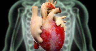 Ученые предсказали появление новой расы людей с двумя сердцами
