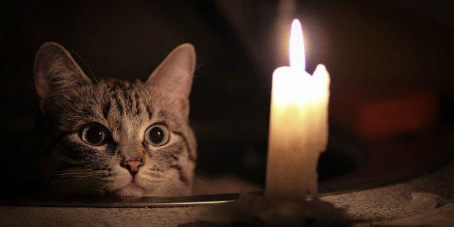 В Карелии кот оставил без света 2 тыс. человек, котельную, детсад и хлебозавод