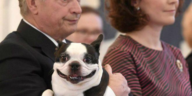 Улыбающийся пес президента Финляндии покорил интернет