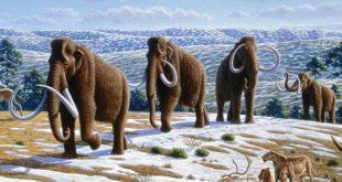 Ученые анонсировали возвращение мамонтов уже через несколько лет