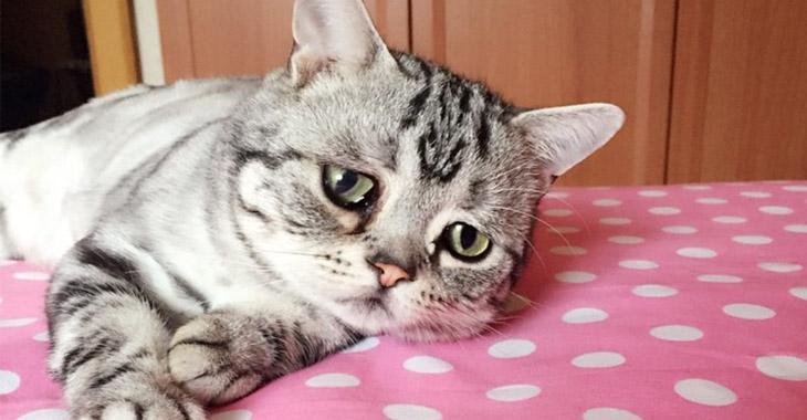 В омуте печали: самая грустная кошечка покорила пользователей соцсетей – СМИ