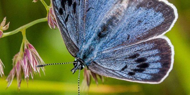 В Британии коллекционер пошел под суд за убийства бабочек