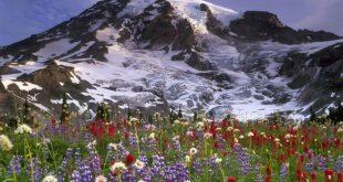 Британец продает бутилированный альпийский воздух по $167 за литр