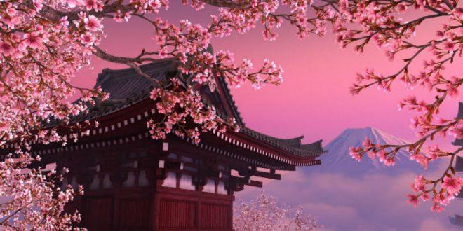 Японцы сообщают о начале сезона цветения сакуры