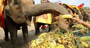 В Таиланде для слонов по случаю их Национального дня накрыли шведские фруктовые столы
