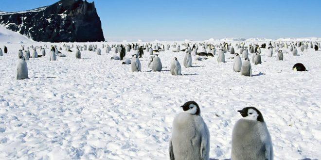 Кандидат в президенты Франции пообещал высылать террористов на Южный полюс