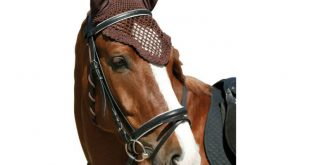 В Москве у лошадей украли вязаные шапочки и попоны