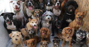 Отправленная на принудительное лечение пенсионерка держала около 30 собак запертыми в однокомнатной квартире
