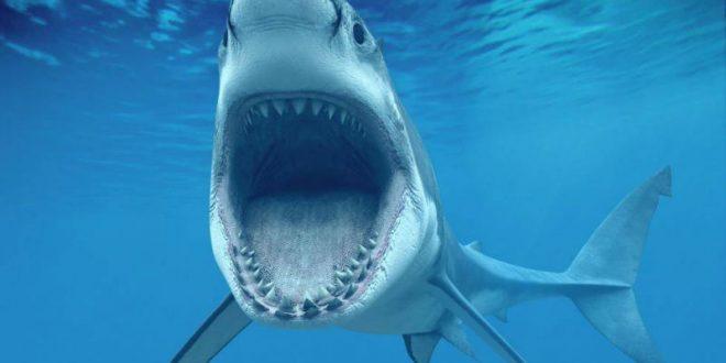 Британец отбил жену у напавшей на нее акулы