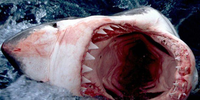 В США школьница отбилась от акулы кулаками