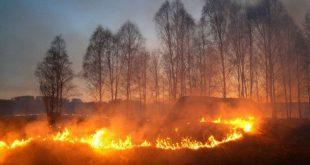 Под Новосибирском поджигатель травы расстрелял возмущенных его действиями соседей
