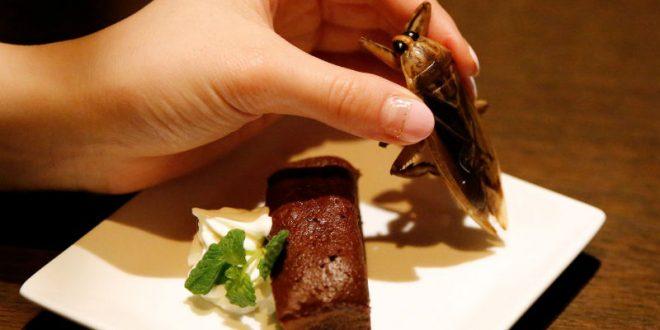 Ученые призвали людей питаться насекомыми ради спасения планеты