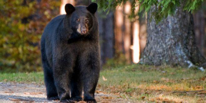 Вооруженный луком и стрелами канадский «индеец» чудом пережил встречу с медведем
