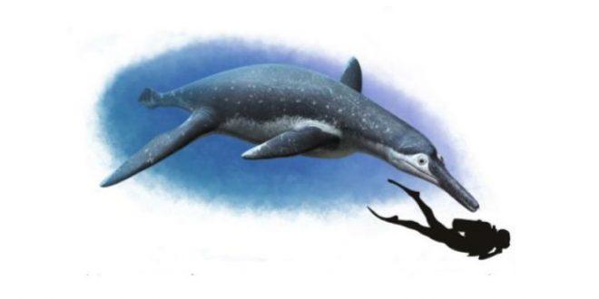 На берегу Волги найдены останки гигантского морского чудовища