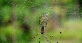 Британка была вынуждена обратиться к врачу из-за поселившегося в ее ухе паука