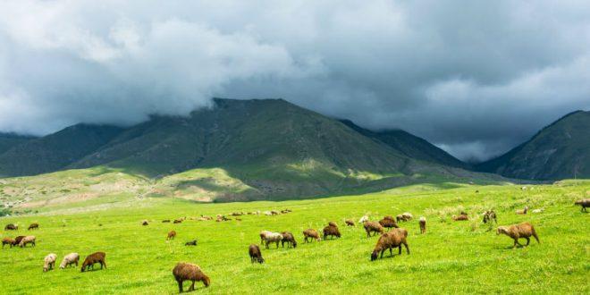 В Забайкалье пастух хранил на стоянке чабанов около 50 мин пока на одной из них не подорвался его сын