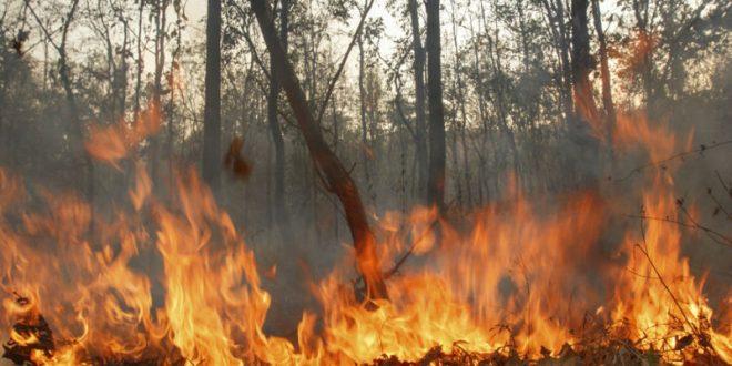 В Красноярском крае пожары уничтожили около 80 жилых домов