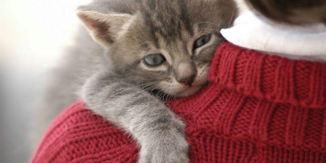 Ирландская ветклиника ищет профессионального «обнимальщика котиков»