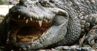 В Зимбабве крокодилы съели священника, пытавшегося пройти по воде как Иисус