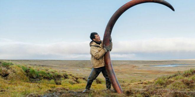 Житель Якутии откопал бивни мамонта во время посадки картошки