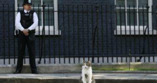 Британцы решили заменить Терезу Мэй на кота Ларри на посту премьер-министра