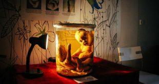 В Новосибирске возле мусорного бака найдена колба с человеческим эмбрионом