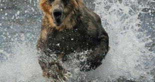 В Иркутской области испугавшийся медведя мужчина застрелил двух рыбаков