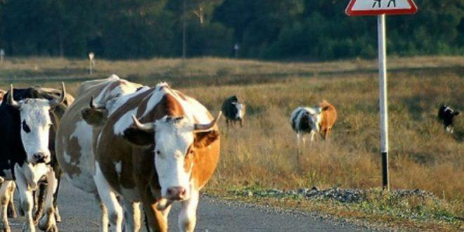 Под Хабаровском двое подростков на мотоцикле погибли в ДТП с коровой