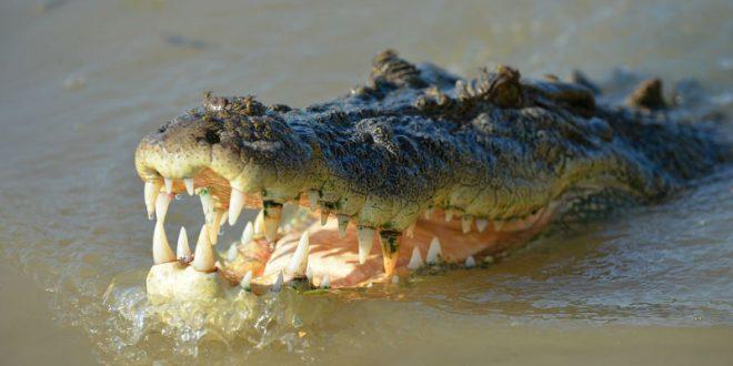 Жителя Новороссийска задержали за выгул крокодила на поводке на общественном пляже