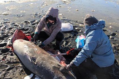 В США начали от холода умирать акулы